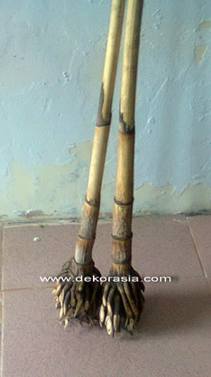 POLO STICK RATTAN WITH ROOT